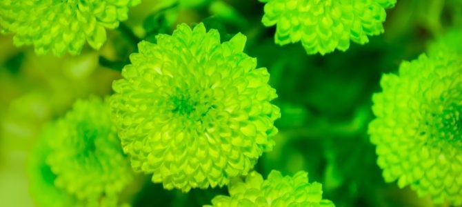 14.09.2018 – Milonga Color – zielona milonga