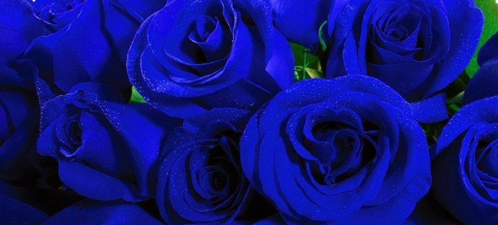 Niebieska milonga